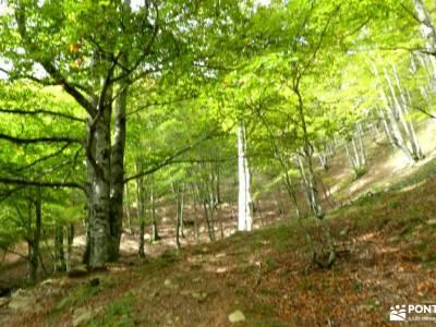 Selva de Irati - Puente del Pilar castillo cuellar silla felipe ii la garganta del chorro sitios que